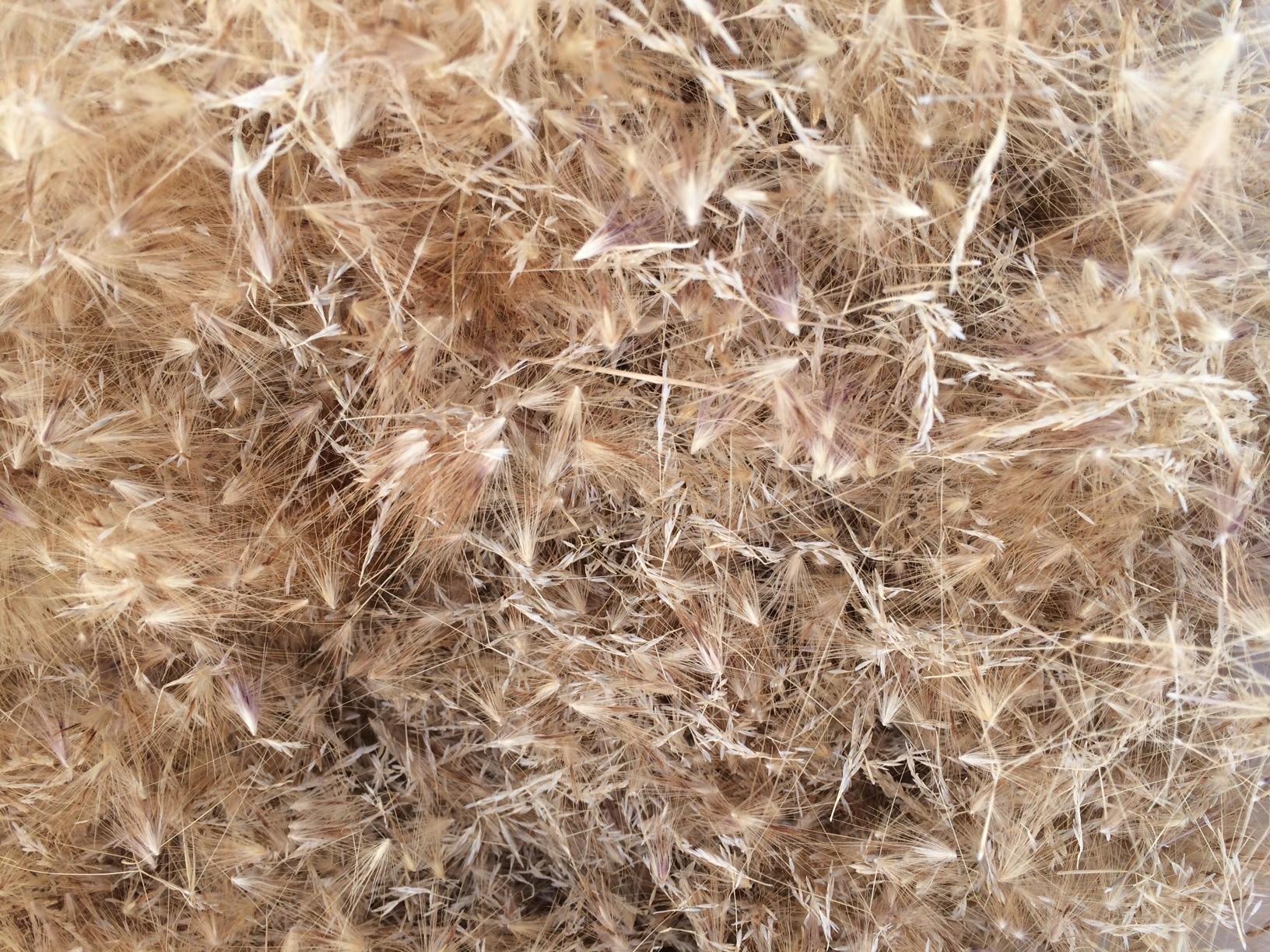 Meadows first haircut